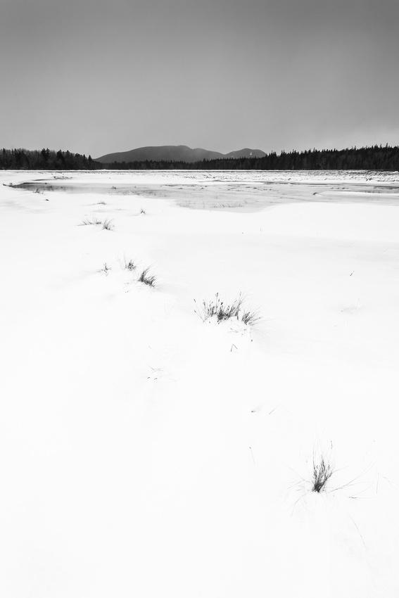 Bass Harbor Marsh Snowfields, (tall crop)