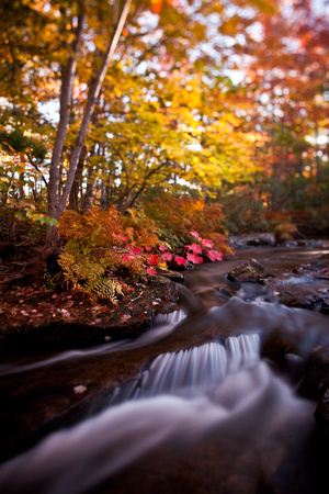 Acadia Autumn at Duck Brook