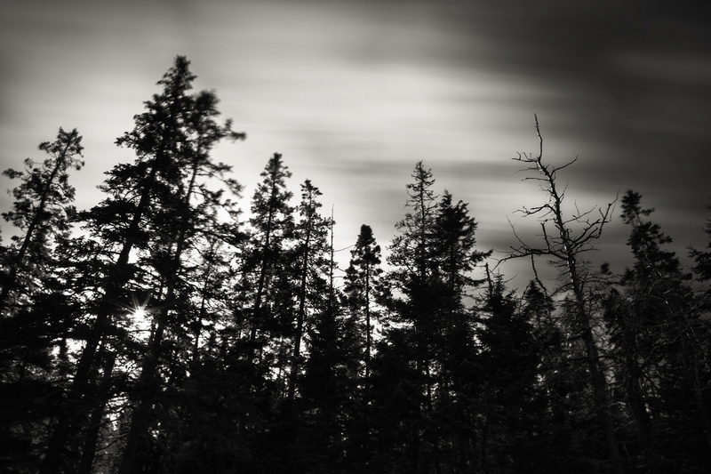 Nate Parker Photography Black And White Pine Tree State Of Mind